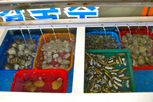 Shellfish tanks